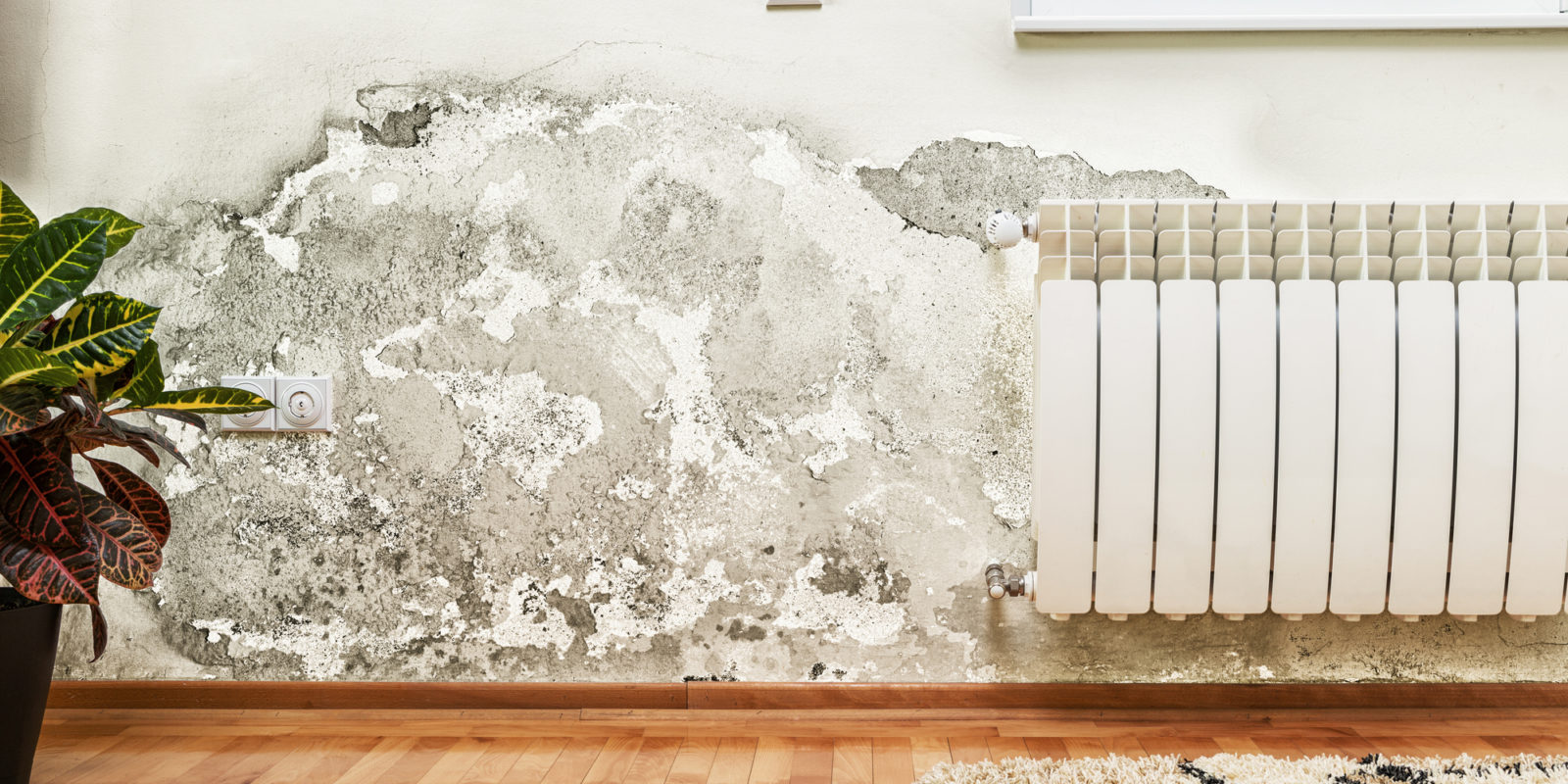 Damp Proofing Specialists Clacton
